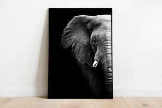 interieur poster olifant
