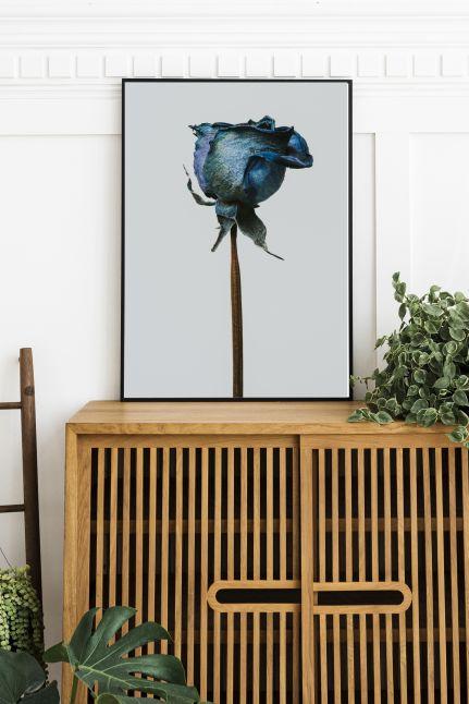 DROOGBLOEMEN blue rose Interieur posters | A3